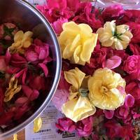 "First in Japan! "" Rose doctor"" in Kanoya-city accomplished organic cultivation of damask rose called Queen of rose"