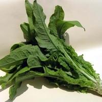 チシャトウでアレルギー性鼻炎が改善!野菜で初めて抗アレルギー作用の特許を取得